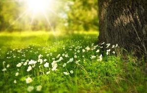 Schöner Baum und Sonne